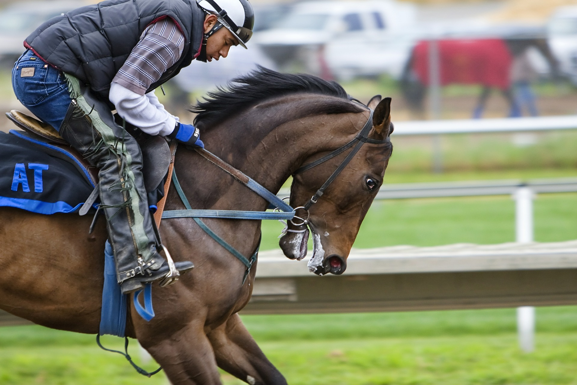 Hobby Tävlingshäst