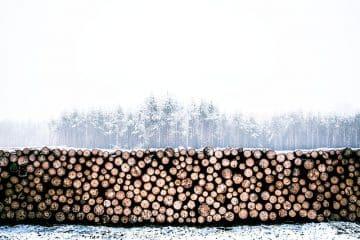 avdrag tillsynsresa skogsbruk