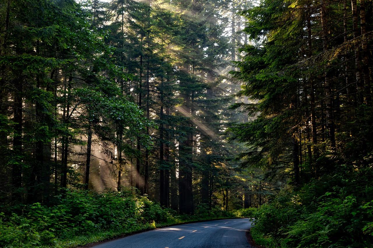 skogsväg skogsavdrag