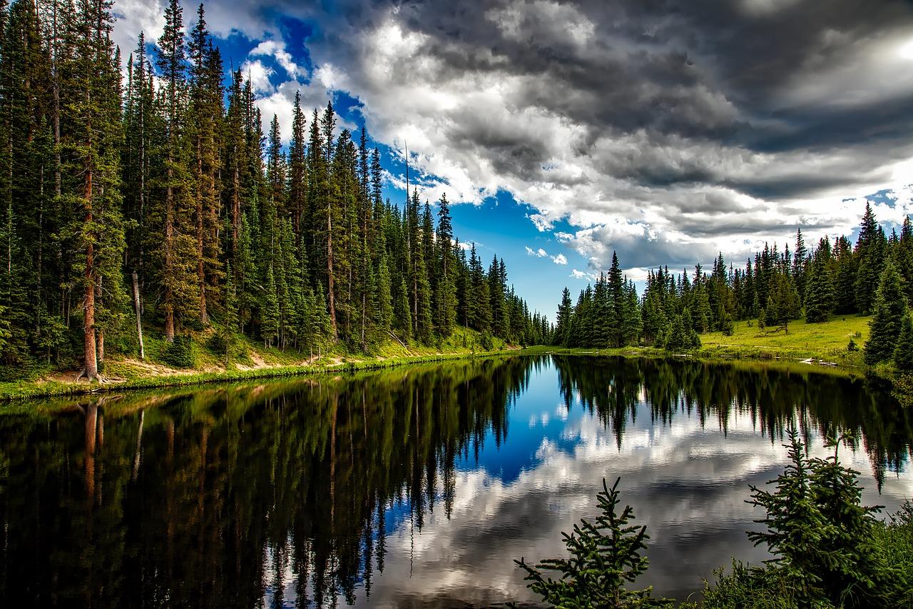 skogskonto skog