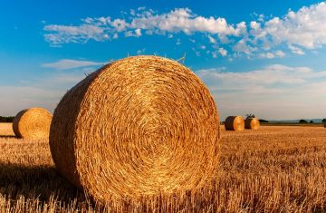 jordbruk sänka skatt