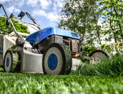 RUT-avdrag för trädgårdsskötsel – Dra av för trädgårdsmästaren